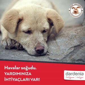 1450186796_Dardenia_Hayvan_Dostu